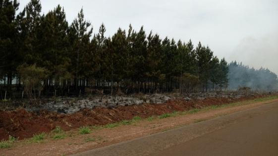Incendio en un pinar de Bonpland