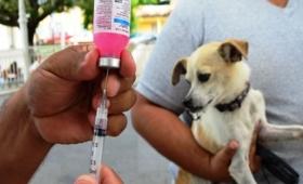 Exigen vacunación antirrábica cada año