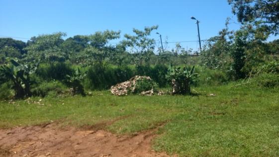 Abandono total a metros de la casa del gobernador Passalacqua