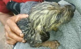 Rescataron a un perrito de una alcantarilla