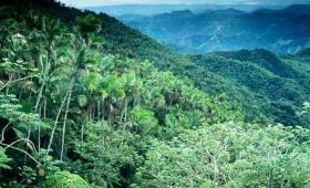 Se redujo la deforestación en Paraguay