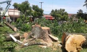 Talan antiguos árboles para construir un tinglado