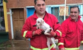 Emotivo rescate de un perro abandonado en un balcón