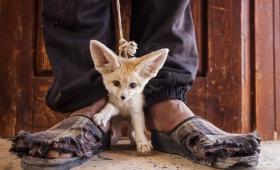 Fotógrafos unidos para denunciar los crímenes contra la naturaleza