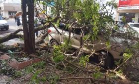 Un árbol cayó sobre un auto frente a La Rosadita