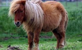 Empleado municipal abusó de un pony y quedó escrachado