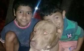 Se salvó el pitbull atacado por una yarará
