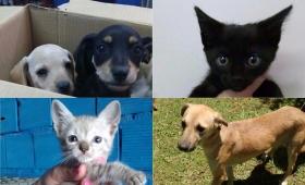 Adopción de mascotas en la Plaza 9 de julio