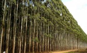 Sancionan a empresa por incumplir proyectos forestales en Corrientes