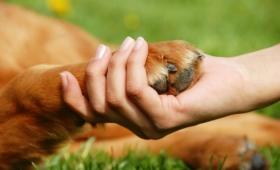Mascotas: claves para una tenencia responsable
