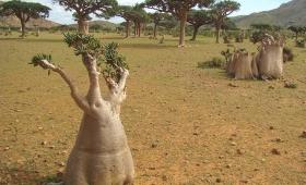 Socotra, el lugar más extraño de la tierra, según la Unesco