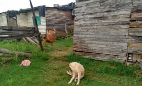 El Gobierno identificó 243 villas en Misiones