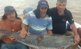 Pescaron un surubí de 60 kilos y lo devolvieron