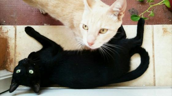 """En el Imusa no hemos detectado gatos con leishmaniasis"""