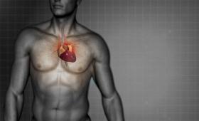 ¿Por qué el corazón se ubica a la izquierda?