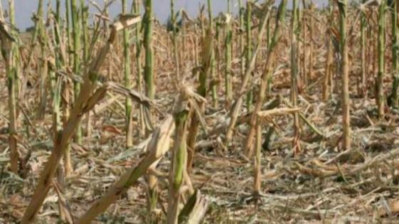 Emergencia agropecuaria para Entre Ríos por la sequía