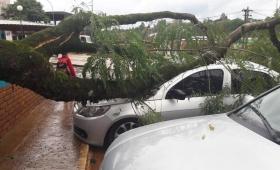 Temporal en San Pedro: un árbol aplastó un auto