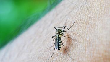 Se registraron en Misiones 156 casos de dengue