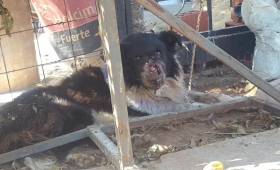 Búsqueda desesperada de un perro herido
