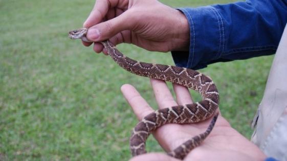 Biólogos descubren nuevas especies de reptiles en Paraguay