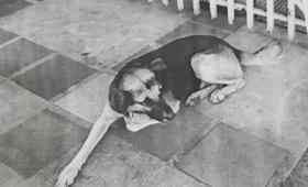 """Un juez ordenó detener a un perro """"prófugo de la justicia"""""""
