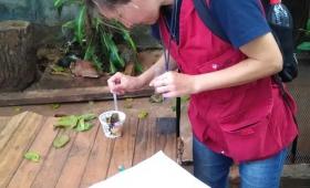 Dengue: el municipio inspeccionó más de 2500 hogares