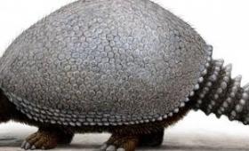 Hallaron fósil de Gliptodonte de 24 mil años en Mar Chiquita