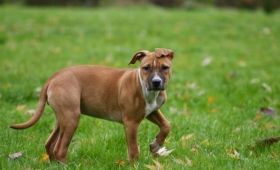 Hidatidosis, una enfermedad que transmiten los perros