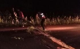 Alvear: eucalipto caído sobre la ruta 5 provocó dos siniestros viales