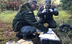 Incautan más de 61 kilos de marihuana abandonados en el monte