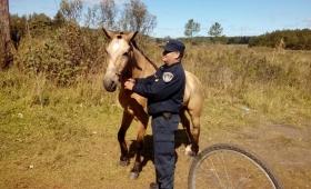 Recuperaron un caballo robado
