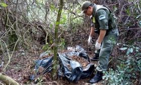 Encuentran marihuana abandonada en el monte