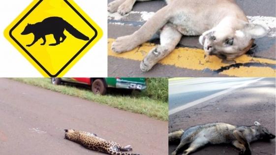 Sacar el pie del acelerador para cuidar a los animales silvestres