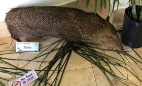 De Wanda a Posadas para mostrar la fauna misionera