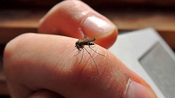 Ya suman 54 los casos de dengue en Jujuy
