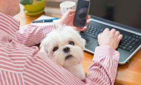 Día Internacional de llevar a tu perro al trabajo