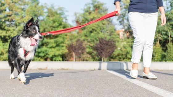 Mendoza: multas para dueños que no junten las heces de su mascota