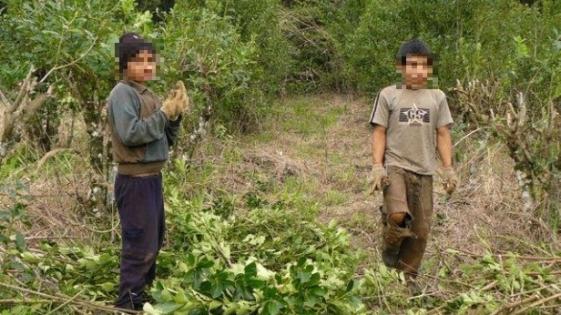 Resultado de imagen para niños trabajando en yerbatales