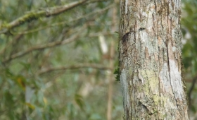 Falleció electrocutado cuando podaba un árbol