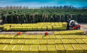 Precios: subió la brecha entre origen y destino de las frutas