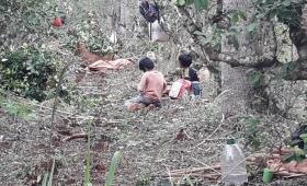 Alertan sobre vínculo entre tercerización y esclavitud en yerbales