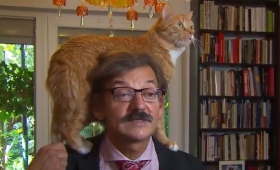 Holanda: un gato interrumpe la entrevista a un politólogo polaco