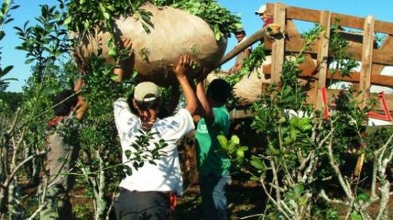 Creció sólo la exportación de yerba y té