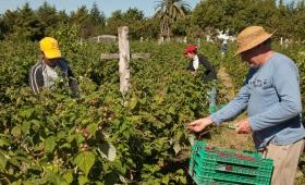 Adiós al Monotributo Social Agropecuario