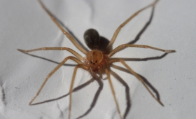 Muerte por picadura de araña: sospechan de mala praxis