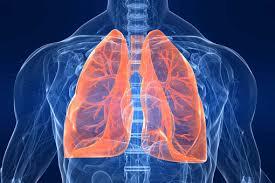 Consiguen trasplantar con éxito pulmones artificiales en cerdos