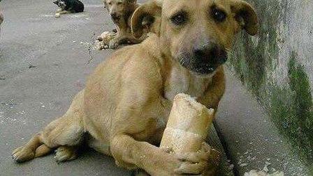 Multan a dueños que no cuidan a sus mascotas