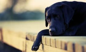¿Pueden los animales sentir duelo?, esto dice la ciencia