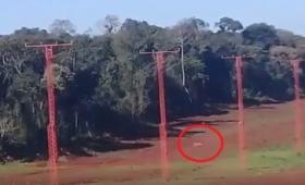 ¿Un yaguareté en el Aeropuerto de Iguazú?