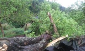 Iguazú: caída de árboles y cortes de luz por la tormenta
